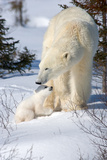 Cub Looking Up to Mother Photographic Print by Howard Ruby
