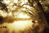 River Oaks II Photographic Print by Alan Hausenflock
