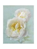 Aqua Floral III Art by Amy Melious