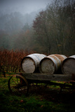 Oregon Wine Country II Photographic Print by Erin Berzel