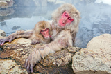 Snow Monkey Mother and Child Photographic Print by Howard Ruby