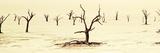 Tree Graveyard Stampa fotografica di Howard Ruby
