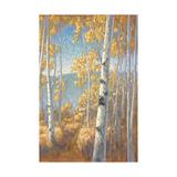 Aspen Forest II Art by John Macnab