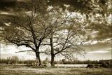 Rolesville Oaks Photographic Print by Alan Hausenflock