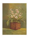Orchids I Prints by Ella Belamar