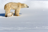 Polar Bear Mother Watching with Her Cubs Photographic Print by Howard Ruby