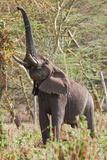 Elephant Reach Stampa fotografica di Howard Ruby