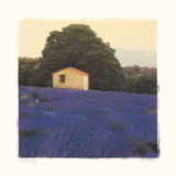 Lavender Country Premium Giclee Print by Amy Melious