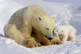 Mother and Cub Photographic Print by Howard Ruby