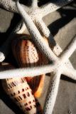 Shells by the Sea II Fotografie-Druck von Alan Hausenflock