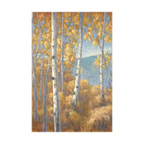 Aspen Forest I Posters by John Macnab