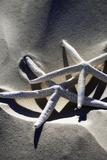 Sea Stars II Fotografie-Druck von Alan Hausenflock
