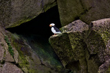 Puffin Cave Reproduction photographique par Howard Ruby