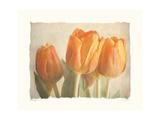 Bellezza I Impressão giclée premium por Amy Melious