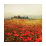 Tuscan Poppies Poster by Amy Melious