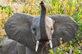 Hello Elephant Stampa fotografica di Howard Ruby