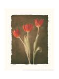 Sonata I Premium Giclee Print by Amy Melious