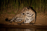 Leopard in the Night Photographic Print by Howard Ruby