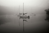 In the Fog - BW Photographic Print by Tammy Putman