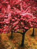 Pink Cherry Tree Photographic Print by Vitaly Geyman