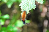 Caterpillar on Leaf I Photographic Print by Logan Thomas