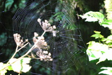 Spiderweb I Photographic Print by Logan Thomas