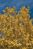 Fall Leaves 1 Photographic Print by Lee Peterson