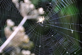 Spiderweb II Photographic Print by Logan Thomas