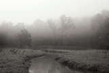 Creek in Fog I - BW Photographic Print by Tammy Putman