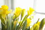 Leaning Daffodils Photographic Print by Karyn Millet