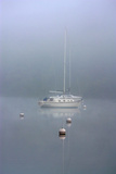 Foggy Morning Photographic Print by Tammy Putman