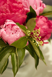Peonies I Photographic Print by Karyn Millet