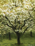 White Cherry Tree I Photographic Print by Vitaly Geyman