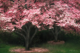 Pink Dogwood II Photographic Print by Vitaly Geyman