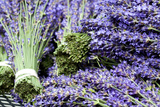 Lavender Bunches I Photographic Print by Dana Styber