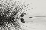 Bird 1 Papier Photo par Lee Peterson
