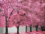 Blossom Heaven I Photographic Print by Vitaly Geyman