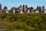 Central Park II Photographic Print by Erin Berzel