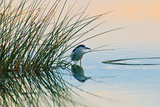Bird 2 Photographic Print by Lee Peterson