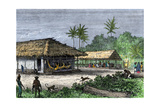 Native Houses in a Jungle of Brazil, 1800s Giclee Print