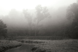 Creek in Fog II - BW Photographic Print by Tammy Putman