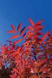 Fall Leaves 3 Photographic Print by Lee Peterson
