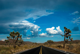 Joshua Tree National Park III Photographic Print by Erin Berzel