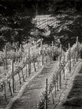 Vineyard I Photographic Print by Scott Larson