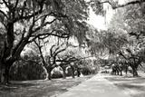 Charleston Oaks 10 Photographic Print by Alan Hausenflock