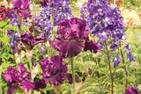 Purple Garden I Photographic Print by Maureen Love