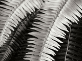 Fern I Photographic Print by Jim Christensen