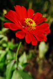 Red and Green I Photographic Print by Bob Stefko