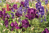 Purple Garden II Photographic Print by Maureen Love