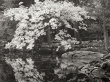 Autumn Reflections II B&W Photographic Print by Vitaly Geyman